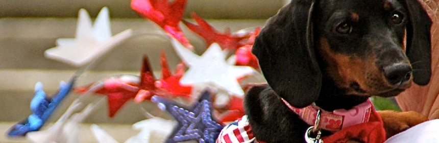 fireworkdog