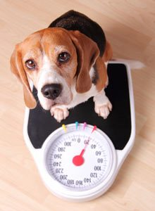 Weight Loss Competition is BACK!! – Compassion Animal Hospital